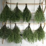 Work in Progress: Herb Drying